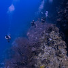 Looking down on divers along the Black Wall, just off La Parguera, Puerto Rico