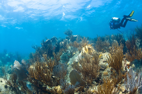 Diving the shallow waters of Culebra, Puerto Rico