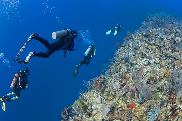 Swimming along the edge of the Black Wall, just off La Parguera, Puerto Rico