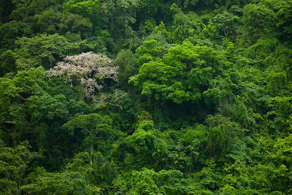 Tropical rainforest in the crater includes the silk cotton tree, gum tree, and trumpet wood