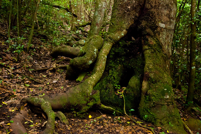 A variety of trees are found on the trail to The Quill