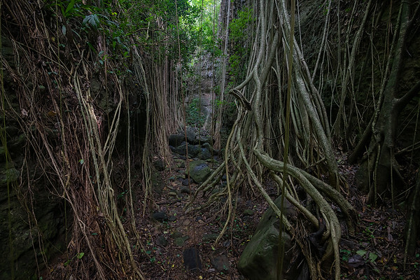 An area of Stone Fort Canyon that is really just a tunnel of vines.