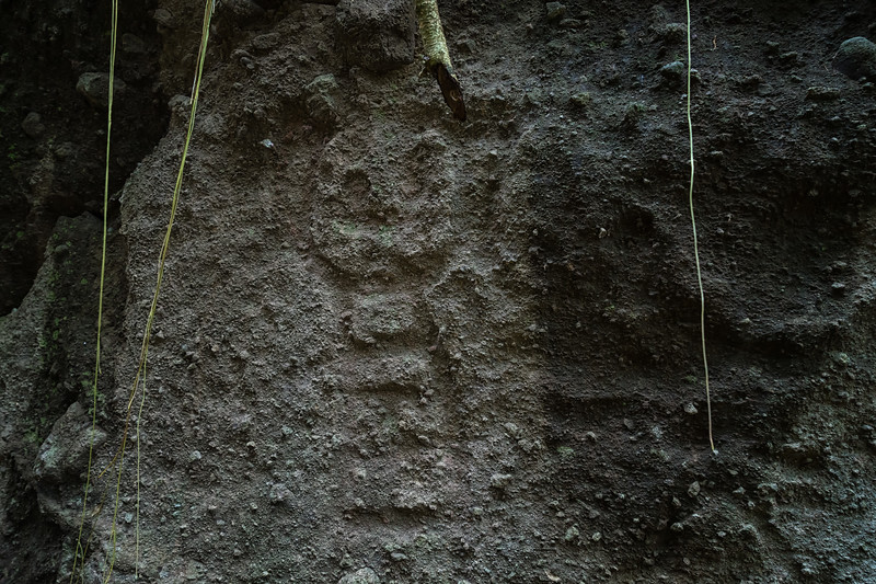 One of the petroglyps that is more hidden than the others, requiring some vigilance and a short climb up some slippery mud (hang on to the vines).