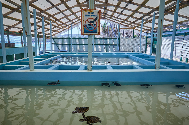 The turtle pools at the Old Hegg Turtle Sanctuary.