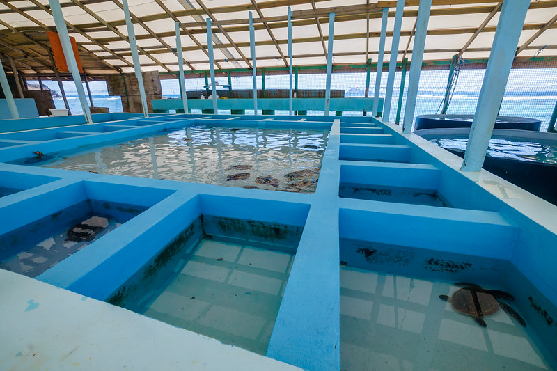 "The smaller pools for solitary turtles are ""hospitals"" to isolate the sick & injured."