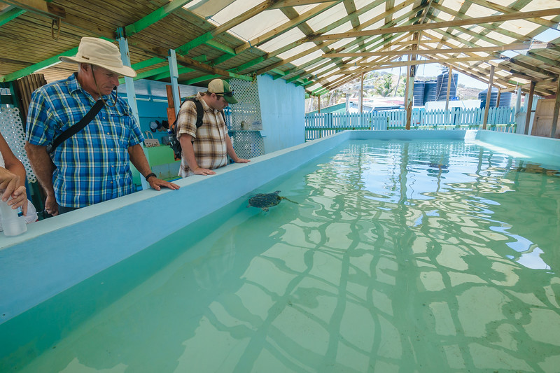 Visitors observing larger hawksbill turtles in one of the pools.