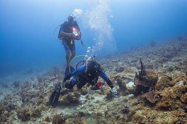 Killing the invasive lionfish in St Croix