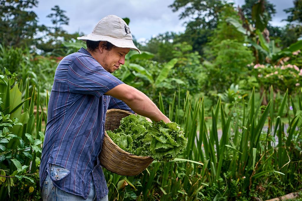 Farming at the Finca Educiva Don Juan in Arenal