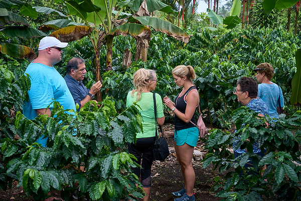 Checking out the coffee plants at Down to Earth Coffee near Arenal