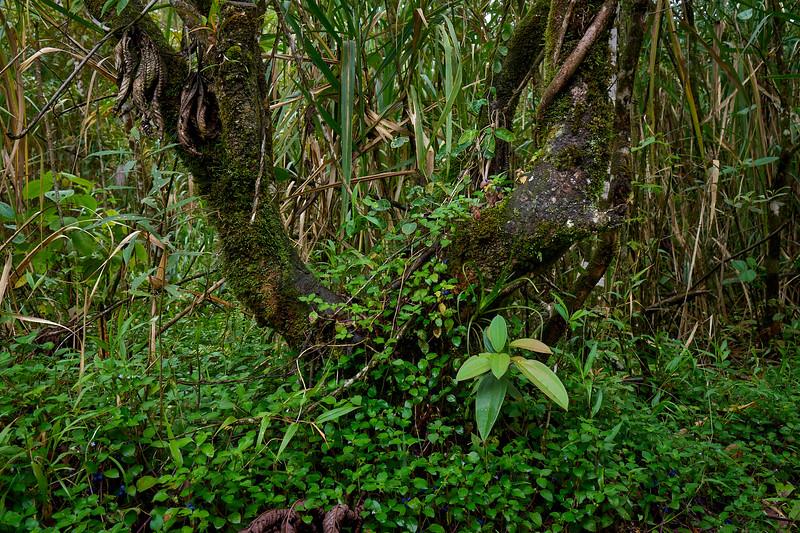 Sendero Las Coladas trail near Arenal