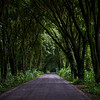 Rural road in Costa Rica