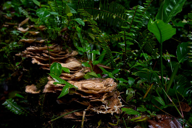 Fungus along the Sendero Las Coladas Trail near Arenal