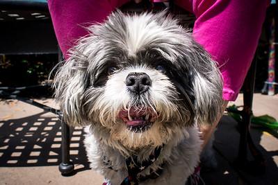 Dogs of Miramar - Pet Event