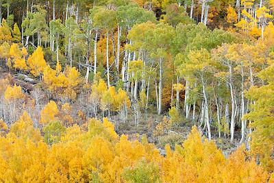 Fall colors near Bishop, California