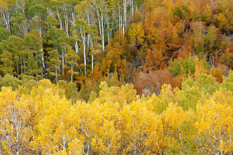 Fall colors on the South Fork of Bishop Creek.