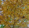 Georgia Fall Colors
