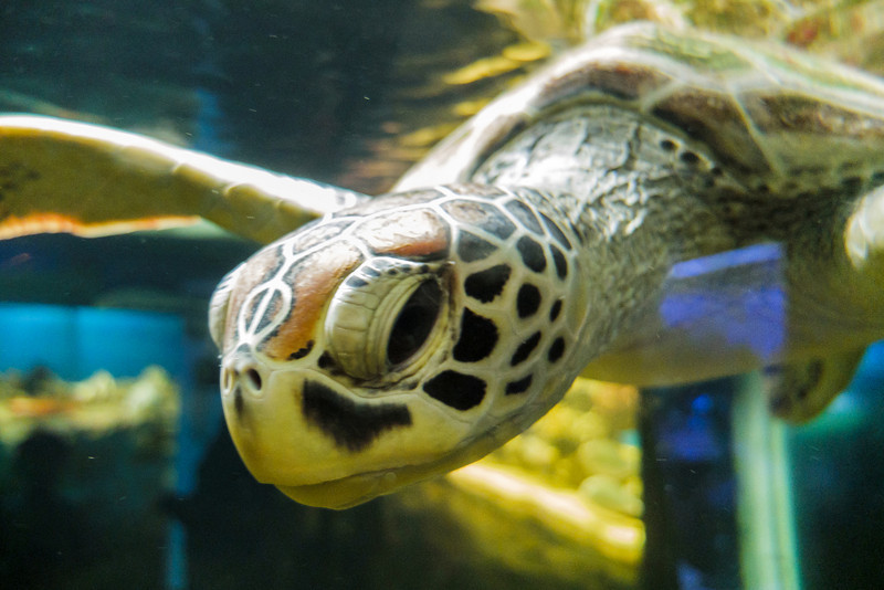 Sea Turtle Close Up at Batu Secret Zoo