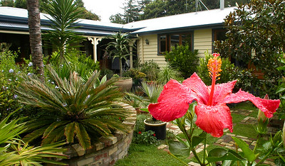 Friend's garden - New Zealand, North Island