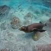 Sea Lion Fishing