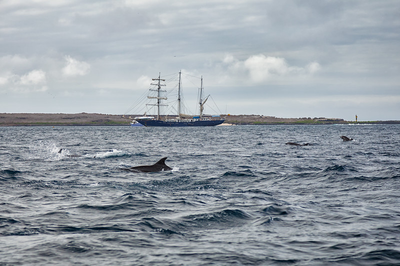 Isla Española Dolphins