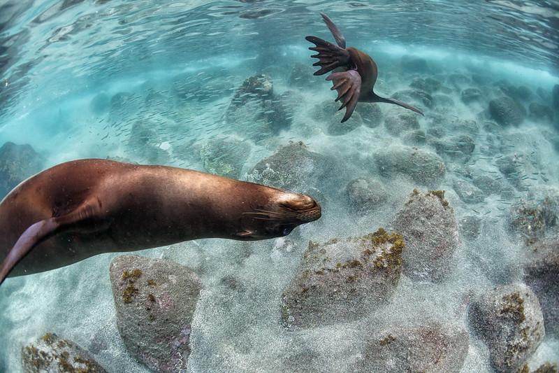 Underwater Acrobats