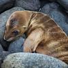 Pup Closeup