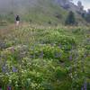 Summer wildflowers on Miranjani