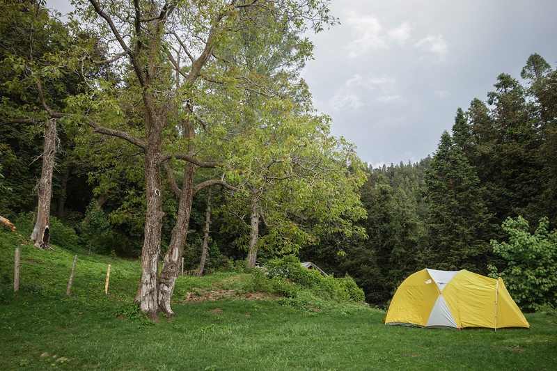 Camping in the meadow at Dagri Bungalow