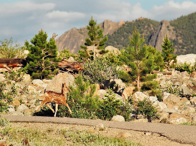 Young Flying Reindeer in training...<br /> <br /> June 2004 (Nikon N-65 35mm Film)