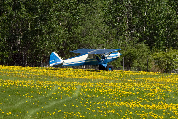 Classic Alaska - Piper Cub parked on the front lawn.