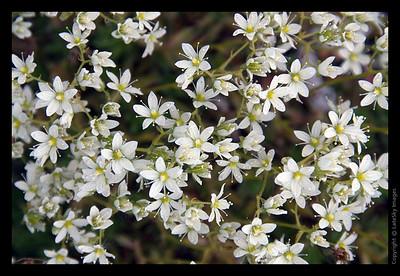 586 Wildflowers