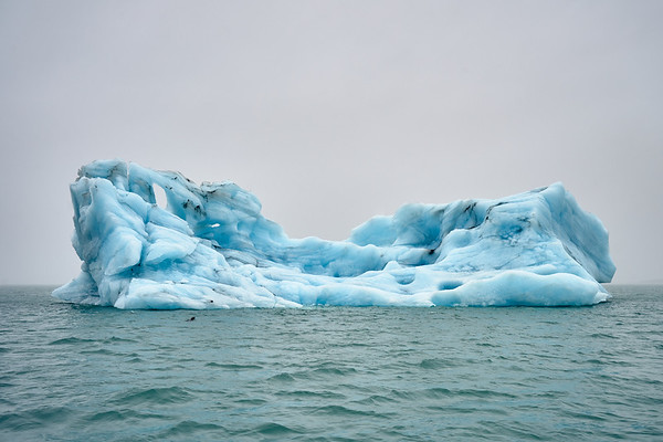 Icebergs (and a sea lion) in Jökulsárlón Lagoon