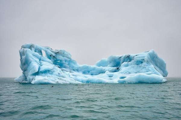 Icebergs (and a sea lion) in Jökulsárlón Lagoon