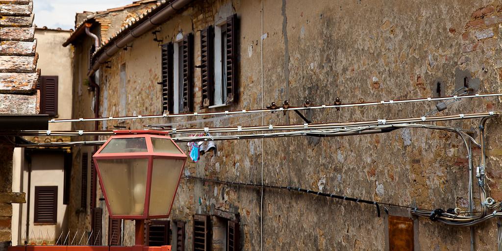 Swallows in San Gimignano, Italy.