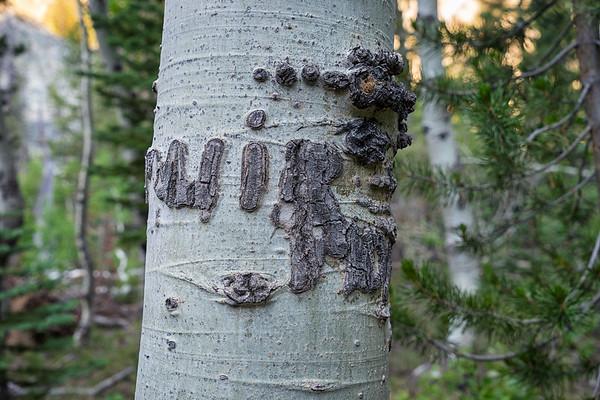 The Muir Aspen