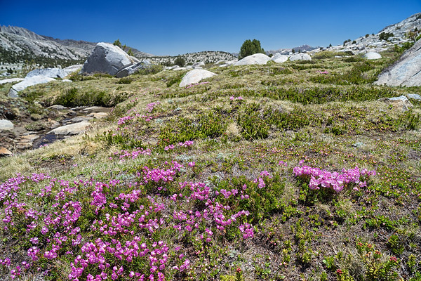 Red Mountain Heather