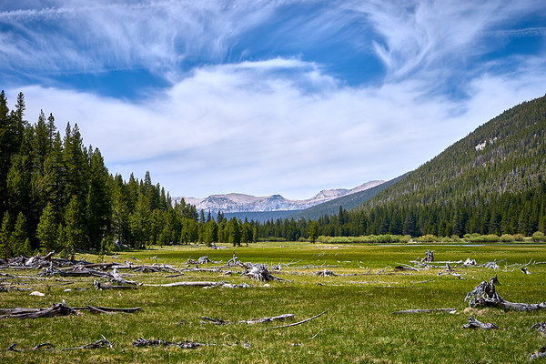 Fallen trees in Lyell Canyon, looking south through the meadow.  Mile 31.