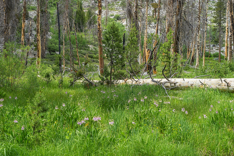 Deer Meadow