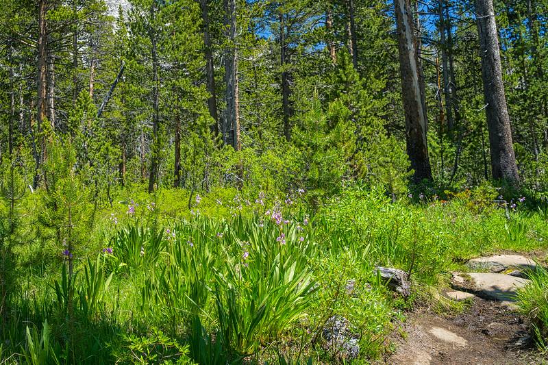 Upper Bear Creek Meadows