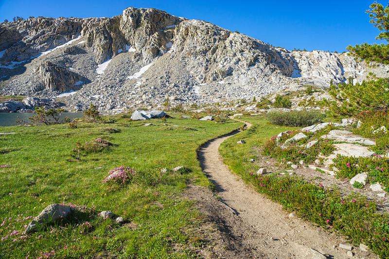 Trampled Trail