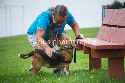 PA K9 Nose Work Camp-Tuesday