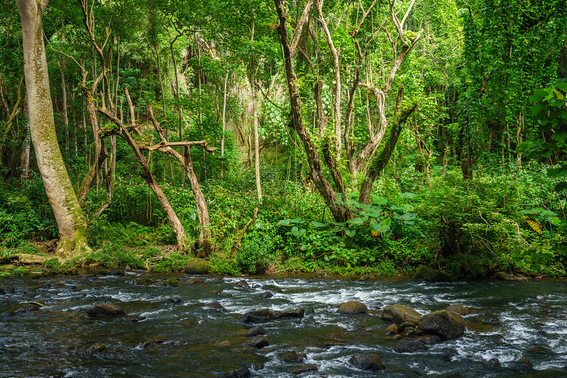 Along the hiking trail to Uluwehi Falls