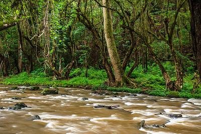 Trail to Uluwehi Falls