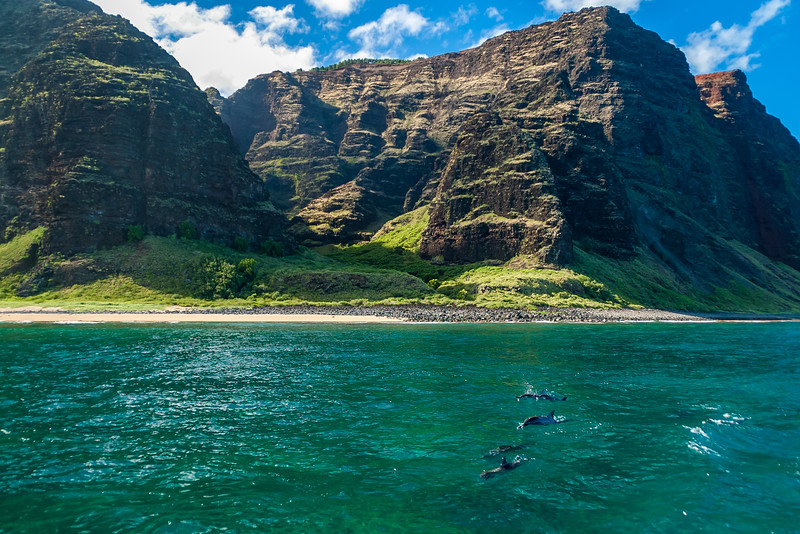 Dolphins following us off the Napali Coast