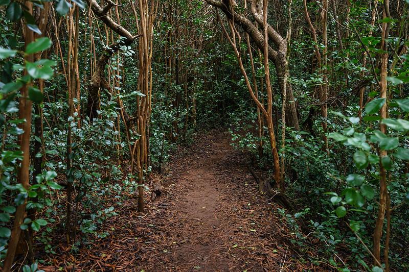 The Awa'awapuhi Trail