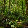 Jungle near Uluwehi Falls