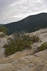 Scruffy bush invading granite