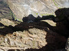 DSC05050a Black Canyon of the Gunnison