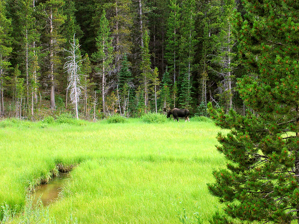 Photo by Mary Jane with her Sony DSC-S40.... Mr. Moose is about 250-300 feet away