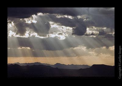 C75 Desert Sunbeams